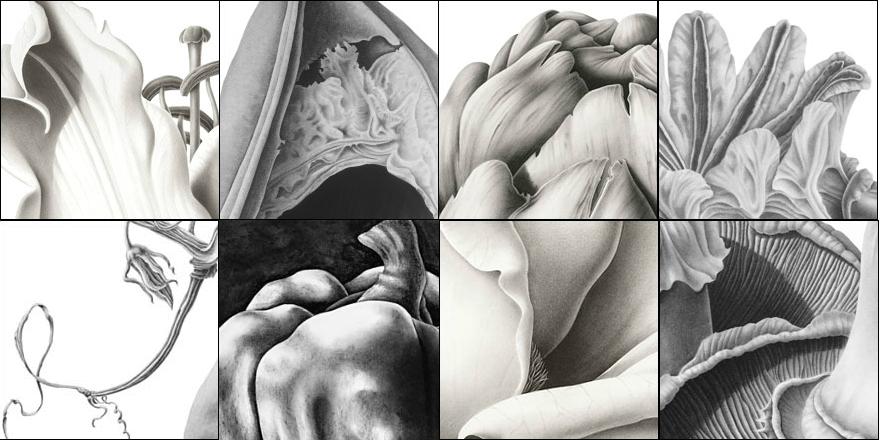SusannahBlaxill-details