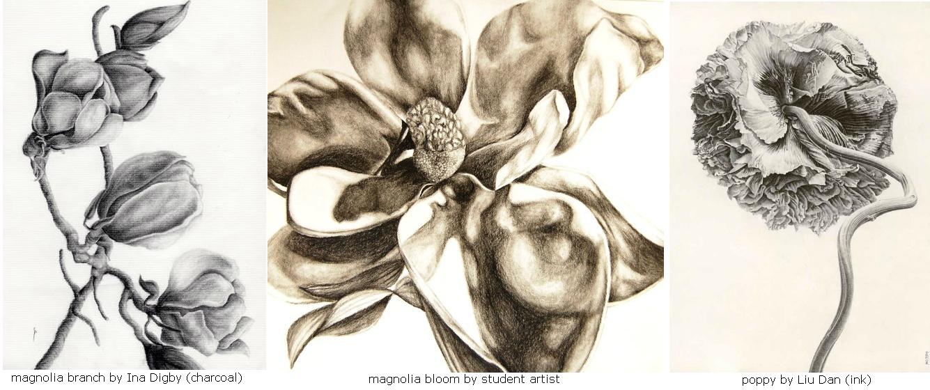 magnolia-poppy