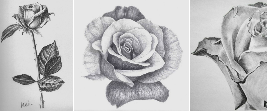 rose-full-to-zoom