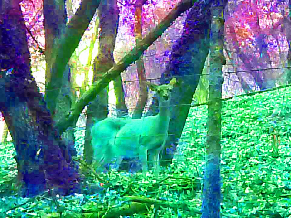 deer-psychedelic